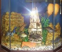 akvarium252