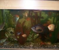 akvarium253