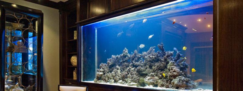 Дизайн аквариумов в Минске
