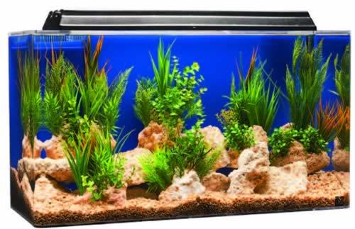 acrylic-aquarium100