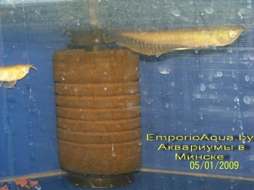 aquarium-fish11