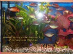 design-aquariums102